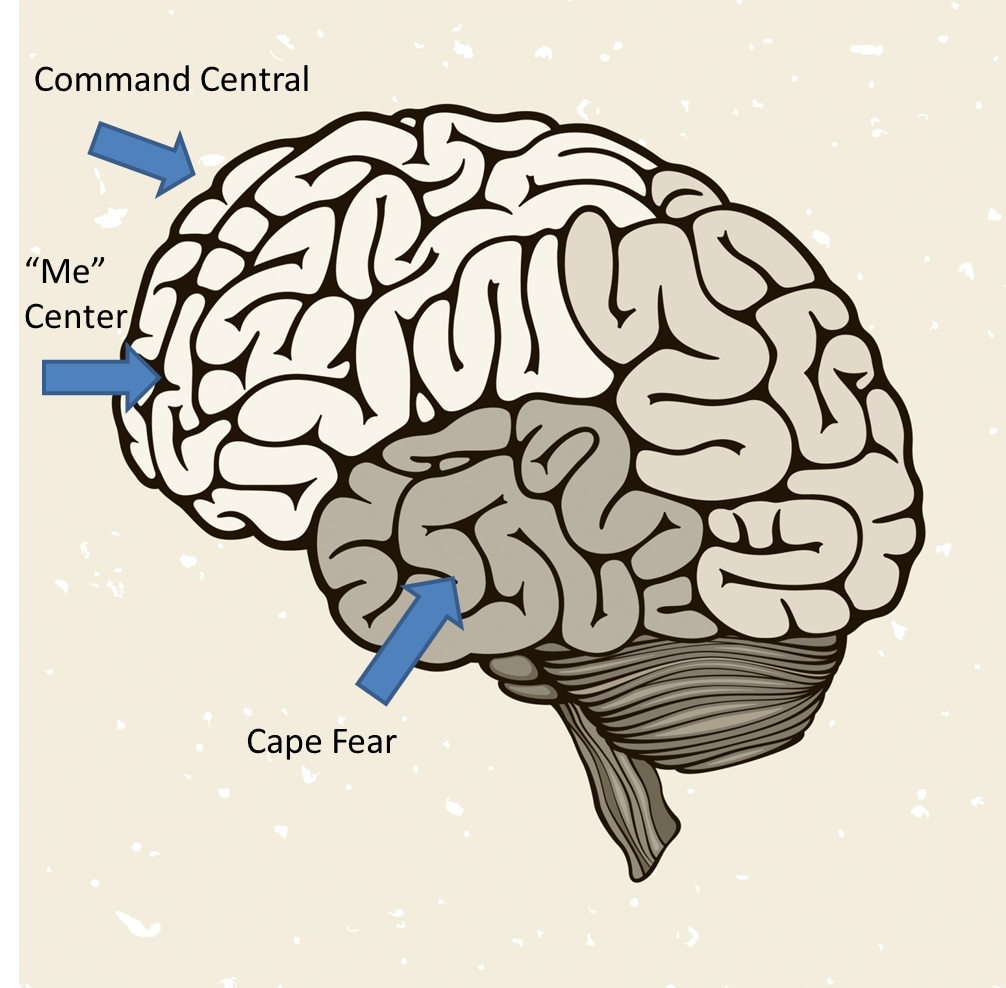 Parts of brain affected by meditation.